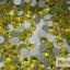 เพชรชวาAA สีเหลือง ขนาด ss10 ซองเล็ก บรรจุประมาณ 80-100 เม็ด thumbnail 1
