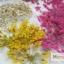 ดอกไม้แห้ง เป็นช่อ 12 สี thumbnail 1