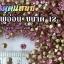 เพชรตูดแหลม สีชมพูอ่อน ซองใหญ่ เลือกขนาดด้านในครับ thumbnail 4