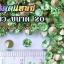 เพชรตูดแหลม สีเขียว ซองเล็ก เลือกขนาดด้านในครับ thumbnail 6