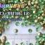 เพชรตูดแหลม สีเขียว ซองใหญ่ เลือกขนาดด้านในครับ thumbnail 4
