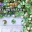เพชรตูดแหลม สีเขียว ซองใหญ่ เลือกขนาดด้านในครับ thumbnail 2