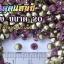 เพชรตูดแหลม สีม่วง ซองเล็ก เลือกขนาดด้านในครับ thumbnail 6