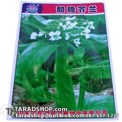 เมล็ดพันธุ์ผัก ผักคะน้าดอก (ชนิดซอง)