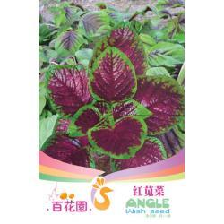 เมล็ดพันธุ์ดอกไม้ (บานไม่รู้โรยสีแดง) ชนิดซอง)