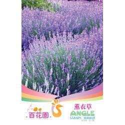 เมล็ดพันธุ์ดอกไม้ (ช่อลาเวนเดอร์) ชนิดซอง)
