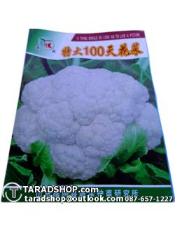 เมล็ดผัก กาดดอก (ชนิดซอง)