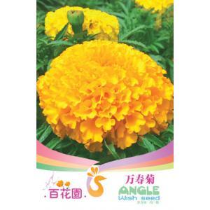 เมล็ดพันธุ์ดอกไม้ (ดอกดาวเรือง) ชนิดซอง)