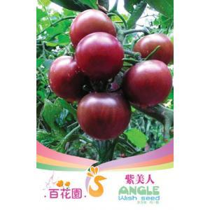 เมล็ดพันธุ์ดอกไม้ (ความงามสีม่วง) ชนิดซอง)