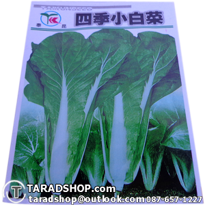 เมล็ดผัก ฟักกาดอ่อน (ชนิดซอง)