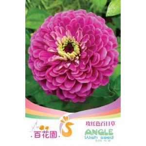 เมล็ดพันธุ์ดอกไม้ (ดอกกุหลาบสีแดงดอกบานชื่น) ชนิดซอง)
