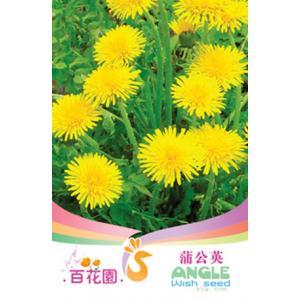 เมล็ดพันธุ์ดอกไม้ (ดอกแดนดิไลอัน) ชนิดซอง)