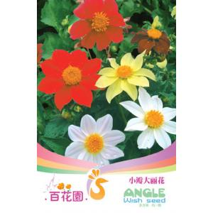 เมล็ดพันธุ์ดอกไม้ (Dahlia) ชนิดซอง)