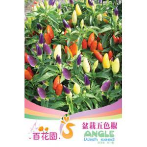 เมล็ดพันธุ์ดอกไม้ (Chidori) ชนิดซอง)
