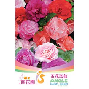 เมล็ดพันธุ์ดอกไม้ (Camellia Impatiens) ชนิดซอง)