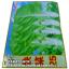 เมล็ดพันธุ์ผัก ผักกาดขาว (ชนิดซอง) thumbnail 1