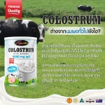 Colostrum Milk Powder Auswelllife Premium Quality 5000 mg lgG นมเหลืองแบบชงแบบเข้มข้นจากออสเตรเลีย