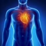 บำรุงหัวใจ/Heart