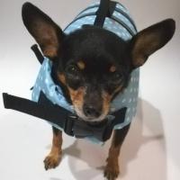 เสื้อชูชีพสุนัข แบบโฟมรอบตัว