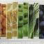 บลูเบอร์รี่ ผสมผลไม้รวมและผัก เอนไซม์สกัดเย็น thumbnail 3