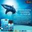 Auswelllife Pure Squalene Tasmanian 1000 mg น้ำมันตับปลาฉลาม thumbnail 2