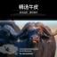 เคสหนังวัวแท้ Huawei P20 และ P20 Pro (กรุณาระบุ) จาก Hongxiang [Pre-order] thumbnail 6