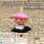 ฝาปิดช่องแฟลชกล้อง Hotshoe การ์ตูน Sushi thumbnail 4