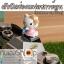 ฝาปิดช่องแฟลชกล้อง Hotshoe การ์ตูน Kitty thumbnail 8