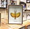 ++ แมลงสต๊าฟ กล่องแมลง ตั๊กแตนกิ่งไม้ที่สวยที่สุดในโลก ปีกสีเหลือง Tagesoidea nigrofasciata // กล่องไม้จริง สีน้ำตาล ++