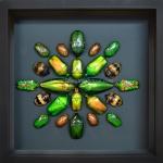 "++ Beetle Art ขนาด 6x6"" แมลงสต๊าฟรูปแบบศิลปะในกล่องไม้พรีเมี่ยม ++"