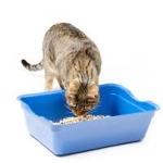 ห้องน้ำแมวและกระบะทรายแมว