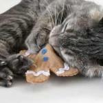 ของเล่นแมวสอดไส้แคทนิป