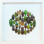 """++ Beetle Art 8x8"""" แมลงสต๊าฟรูปแบบศิลปะในกล่องไม้พรีเมี่ยม ++"""