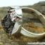 Campo Del Cielo Meteorite แหวนเงินแท้ 925 (แหวนเบอร์ : 57 ,5.9g) thumbnail 7
