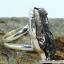 Campo Del Cielo Meteorite แหวนเงินแท้ 925 (แหวนเบอร์ : 55 ,5g) thumbnail 3