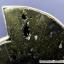 ไพไรต์แอมโมไนต์ Pyrite Ammoniteแหวนเงินแท้ 925 (แหวนเบอร์ : 56) thumbnail 4