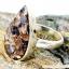 ลาบราโดไรต์ Labradorite Copper แหวนเงินแท้ 925 (แหวนเบอร์ : 61 ,4.8g) thumbnail 5