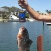 เครื่องชั่งปลา