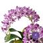 แจกันดอกไม้ประดิษฐ์ ช้างกละ Rhynchostylis Gigantea สีม่วง ในแจกันเซรามิคอย่างดี thumbnail 2