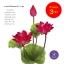 จำหน่ายดอกบัวปลอมเป็นชุดสำหรับจัดแจกัน เป็นดอกบัวหลวงปลอม ขนาดใหญ่ (เท่าดอกบัวจริง) จำนวน 3 ชุด thumbnail 4