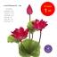 จำหน่ายดอกบัวประดิษฐ์ เป็นชุด เป็นช่อ เป็นดอกบัวหลวงปลอม ขนาดใหญ่ (เท่าดอกบัวจริง) จำนวน 1 ชุด thumbnail 4