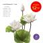 จำหน่ายดอกบัวประดิษฐ์เป็นชุดสำหรับจัดแจกัน เป็นดอกบัวหลวงปลอมขนาดใหญ่ (เท่าดอกบัวจริง) จำนวน 12 ชุด thumbnail 3