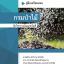 เฉลยแนวข้อสอบ นักวิชาการเงินและบัญชี กรมป่าไม้ thumbnail 1