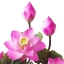 แจกันดอกบัวประดิษฐ์ ดอกบัวหลวงขนาดเล็ก 6 ดอก 6 ใบ สำหรับประดับตกแต่งหิ้งพระ เสริมความงดงามแก่มุมสงบและศักดิ์สิทธ์ thumbnail 2
