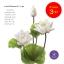 จำหน่ายดอกบัวปลอมเป็นชุดสำหรับจัดแจกัน เป็นดอกบัวหลวงปลอม ขนาดใหญ่ (เท่าดอกบัวจริง) จำนวน 3 ชุด thumbnail 3