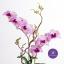 แจกันดอกไม้ประดิษฐ์ เดนโดรเบียม Dendrobium สีชมพู ในแจกันเซรามิค thumbnail 4
