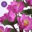 แจกันดอกบัวประดิษฐ์แฮนดิท็อพ เพื่อบูชาพระ ถวายวัด หรือเป็นของขวัญขึ้นบ้านใหม่ ดอกบัวหลวงขนาดใหญ่ 12 ดอก thumbnail 4