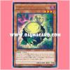 CPL1-JP002 : Kuribandit (Rare)