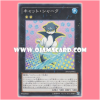 PP17-JP016 : Cat Shark (Common)