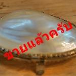 เปลือกหอยมุขรหัส22358ps
